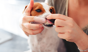 Mauvaise haleine du chien : quelles sont les causes et solutions ?