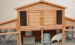 poules. Black Bedroom Furniture Sets. Home Design Ideas